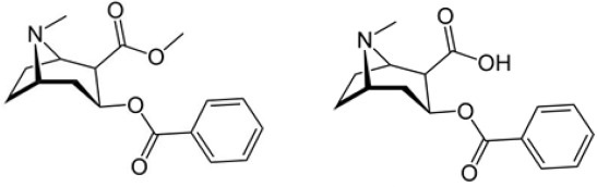 Cocaine (left) and benzoylecgonine.