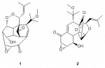 Proposed structures of hexacyclinol